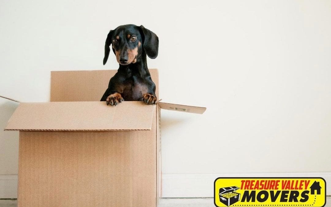 Moving with Pets: Tips and Tricks